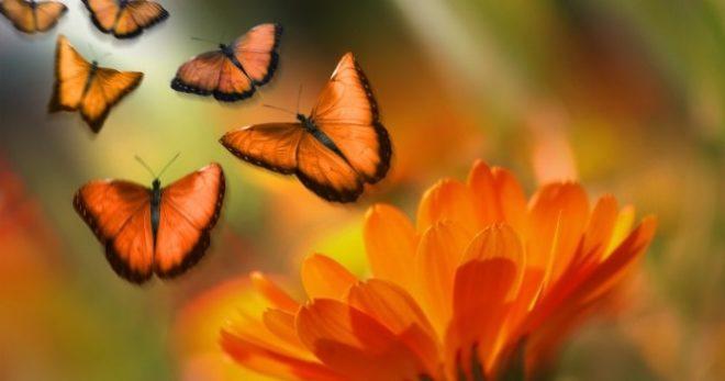 butterfly-1327814_1280
