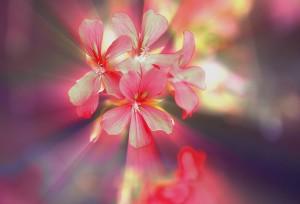 flowers-711984_1280